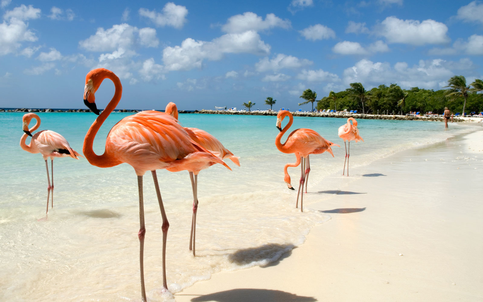 My Latest Obsession: Aruba