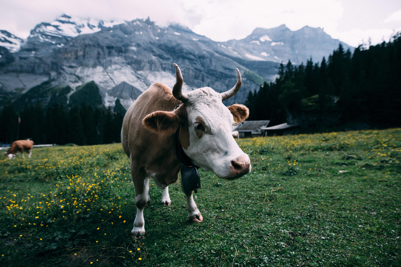 Your Next Incentive Travel Destination: Switzerland